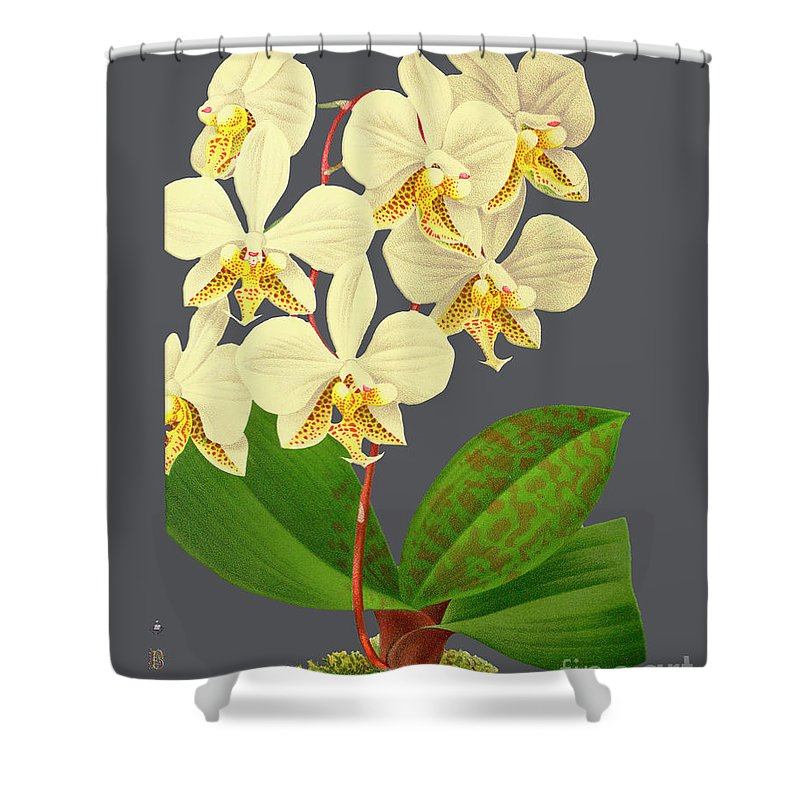 Vintage Shower Curtain featuring the mixed media Orchid Old Print by Baptiste Posters
