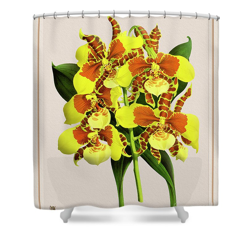 Vintage Shower Curtain featuring the drawing Orchid Vintage Print On Tinted Paperboard by Baptiste Posters