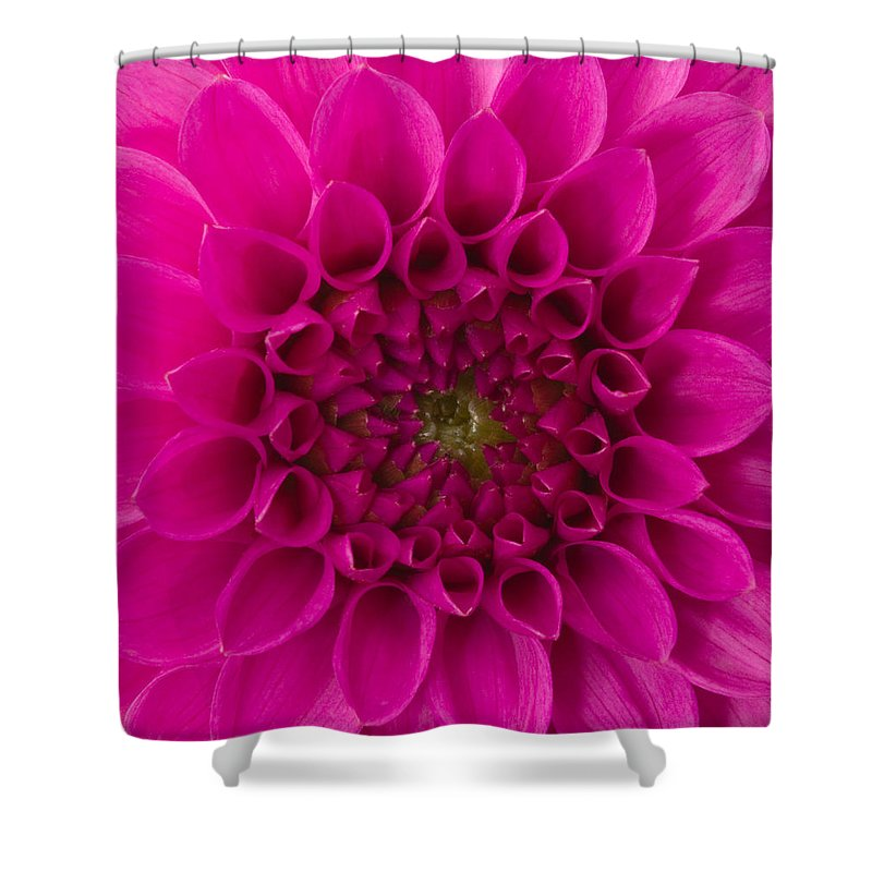 Saturated Color Shower Curtain featuring the photograph Dahlia by Vidok
