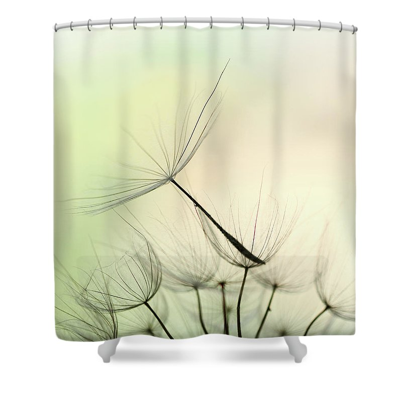 Single Flower Shower Curtain featuring the photograph Dandelion Seed by Jasmina007