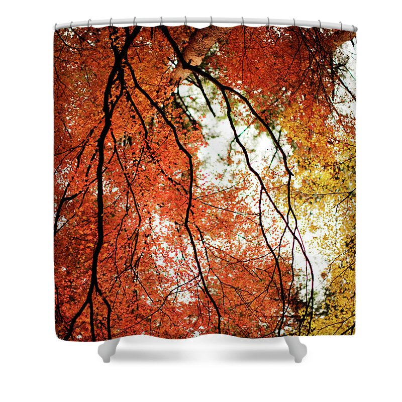 Tranquility Shower Curtain featuring the photograph Fall Colors In Japan by Jdphotography