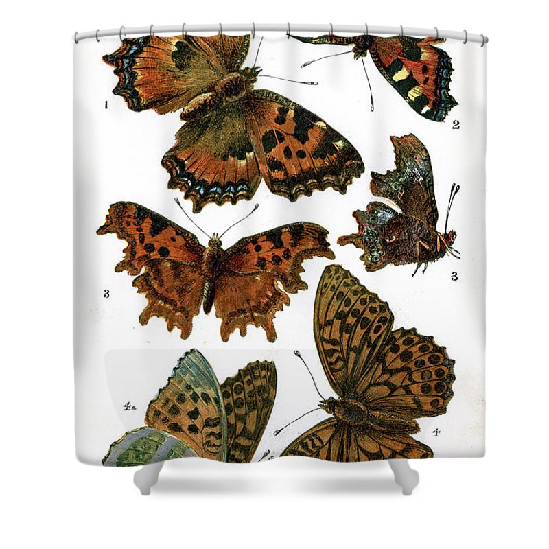 White Background Shower Curtain featuring the digital art Butterflies by Duncan1890