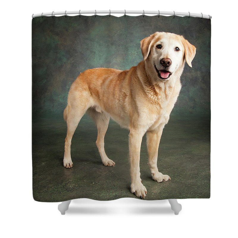 Photography Shower Curtain featuring the photograph Portrait Of A Labrador Mixed Dog by Panoramic Images