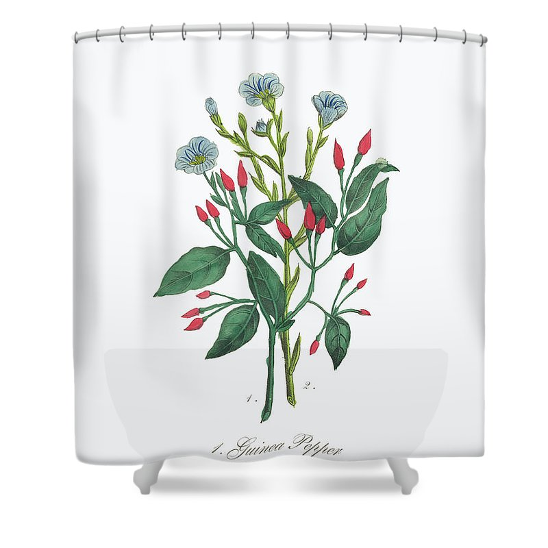 White Background Shower Curtain featuring the digital art Victorian Botanical Illustration Of by Bauhaus1000