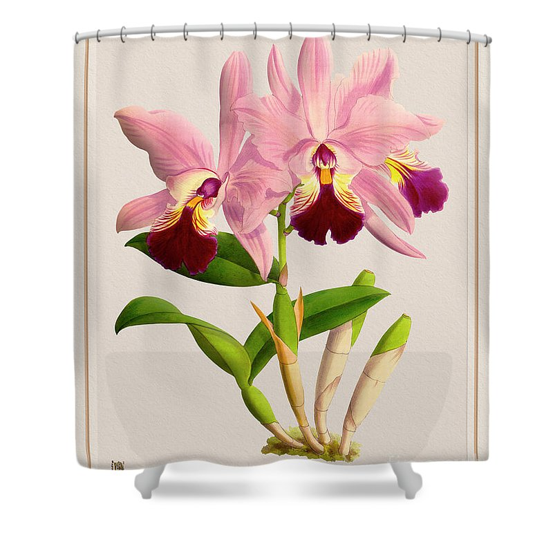 Colors Shower Curtain featuring the digital art Orchid Vintage Print On Colored Paperboard by Baptiste Posters