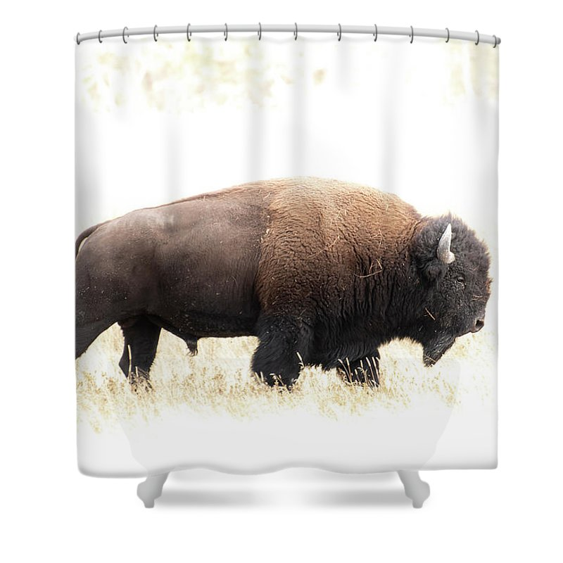 North America Shower Curtain featuring the photograph Bison by Christian Heeb