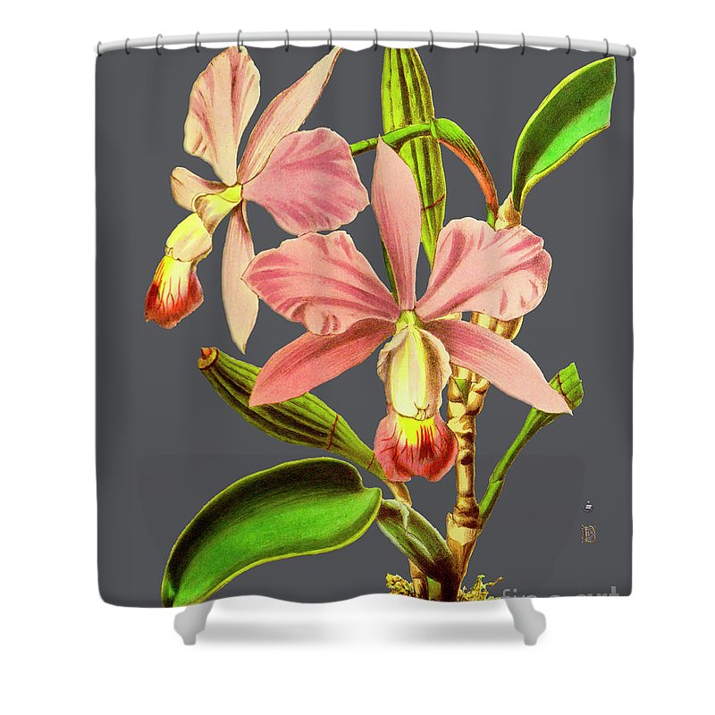 Vintage Shower Curtain featuring the digital art Orchid Old Print by Baptiste Posters