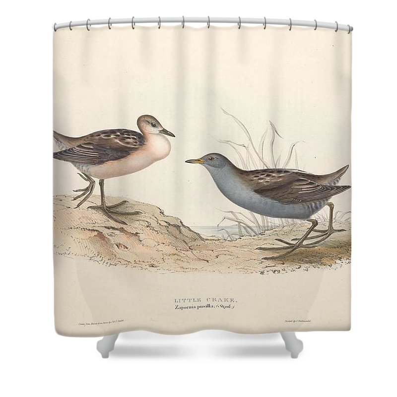 Nature Shower Curtain featuring the painting Different Types Of Birds Illustrated By Charles Dessalines D Orbigny 1806-1876 21 by Charles Dessalines D Orbigny
