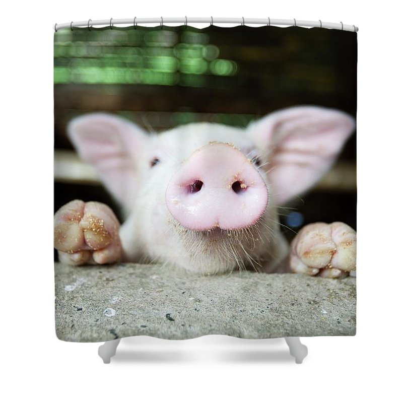 Negros Oriental Shower Curtain featuring the photograph A Baby Pig In Its Pen by Design Pics / Deddeda