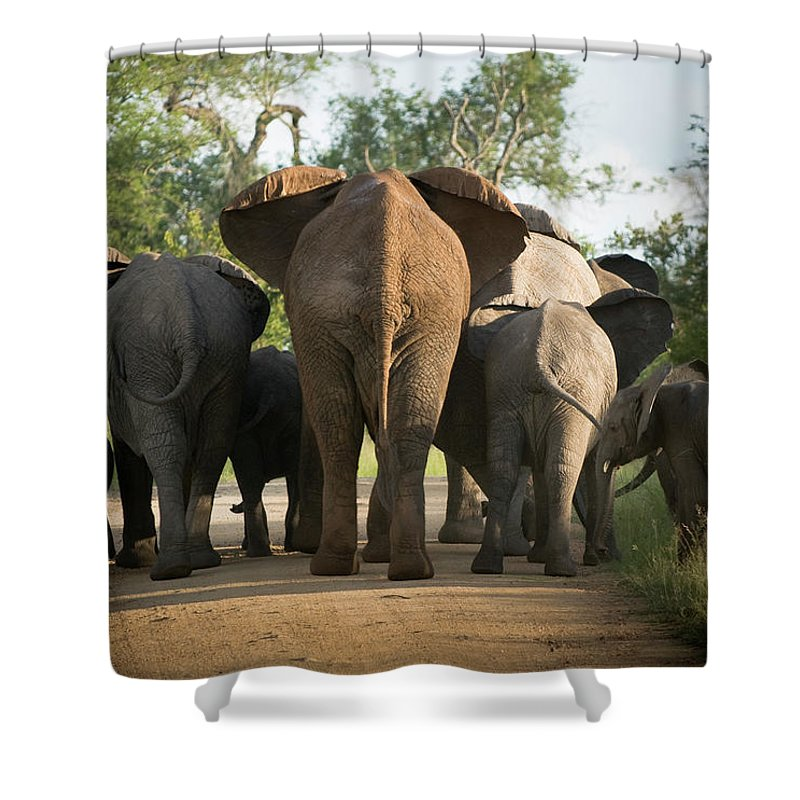 Cow Shower Curtain featuring the photograph A Herd Of Elephants Heading Away From Us by Jono0001