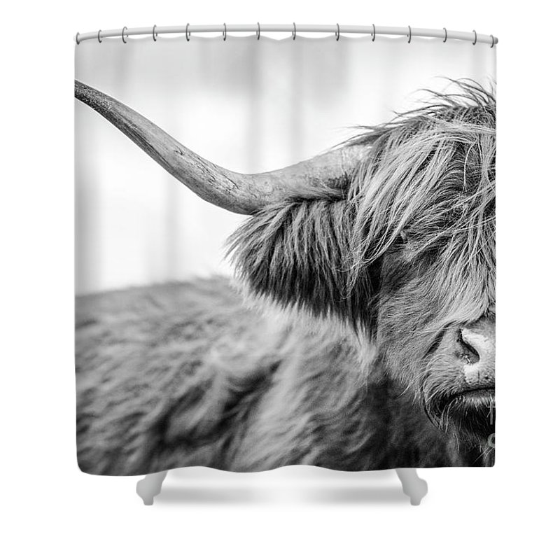 Horned Shower Curtain featuring the photograph A Highland Cow In Scotland by Paul Allen