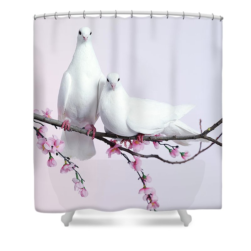 Purity Shower Curtain featuring the photograph A Pair Of Doves Sat On A Branch With by Walker And Walker