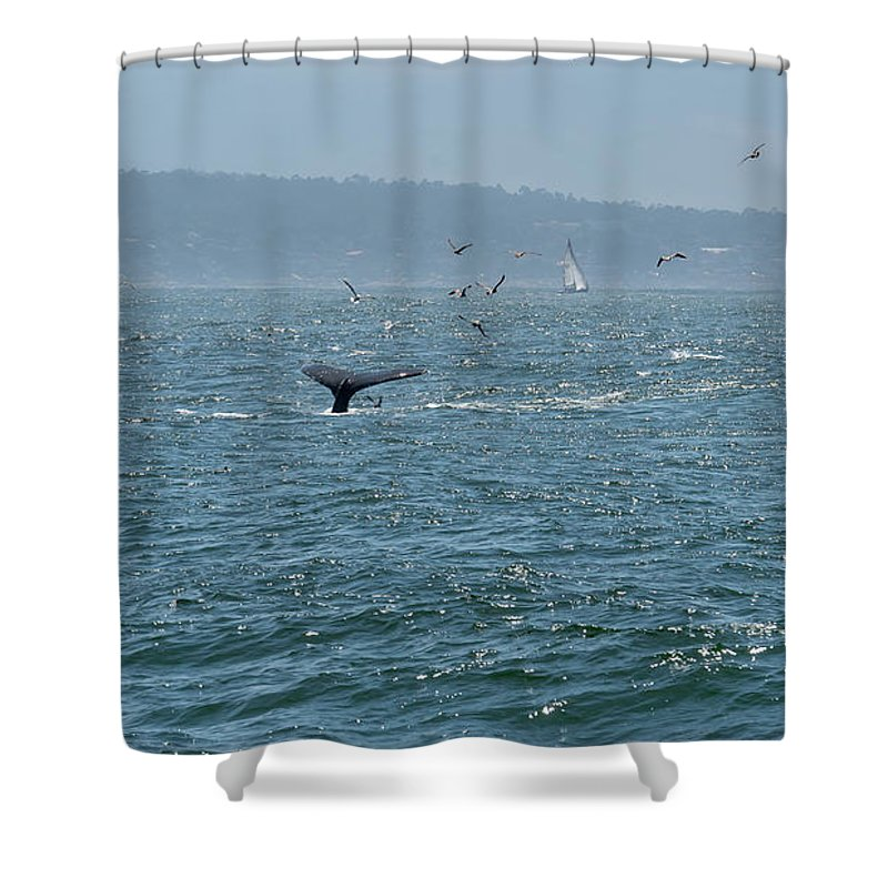 Big Shower Curtain featuring the photograph A Whale's Tail Above Water With Sail Boat In The Background by PorqueNo Studios