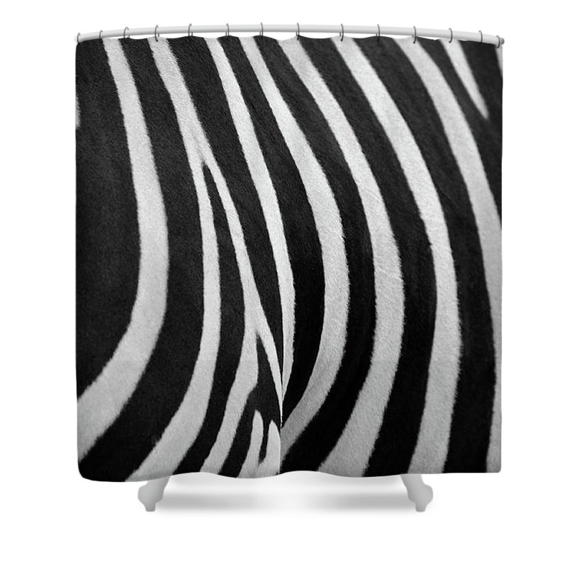 Animal Themes Shower Curtain featuring the photograph Abstraction Zebra by Rashed Alsikhan