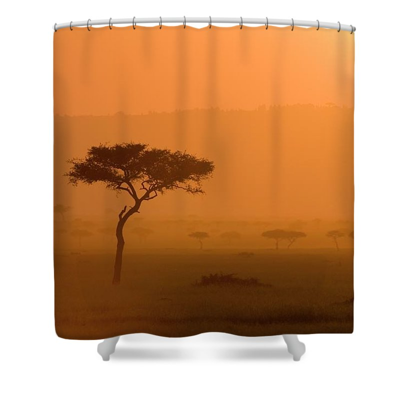 Tranquility Shower Curtain featuring the photograph Acacia Tree At Sunset, Masai Mara by James Hager / Robertharding