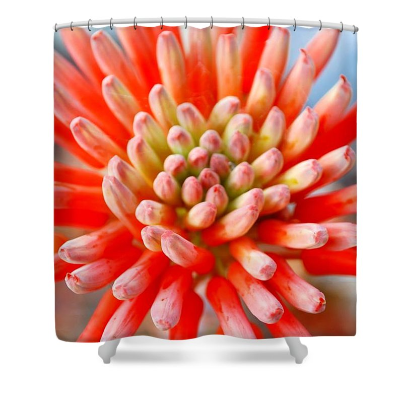Plant Attribute Shower Curtain featuring the photograph Aloe Flower by Lazingbee