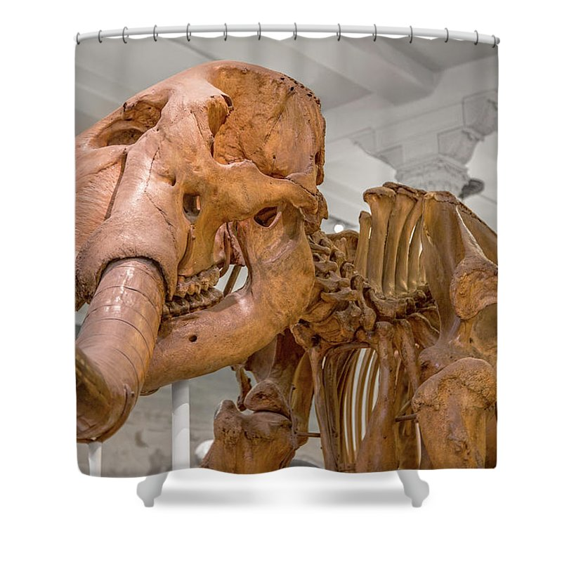 Wooly Shower Curtain featuring the photograph An Enormous Guy by Betsy Knapp