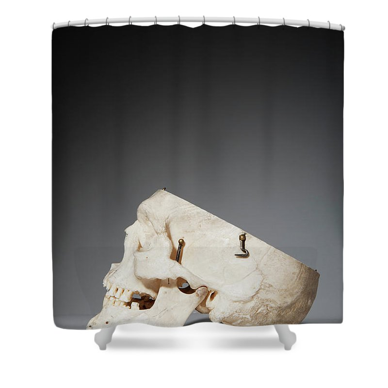 Sweden Shower Curtain featuring the photograph Anatomical Model Of Human Skull by Johner Images