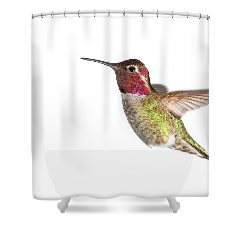 Hanging Shower Curtain featuring the photograph Annas Hummingbird - Male, White by Birdimages