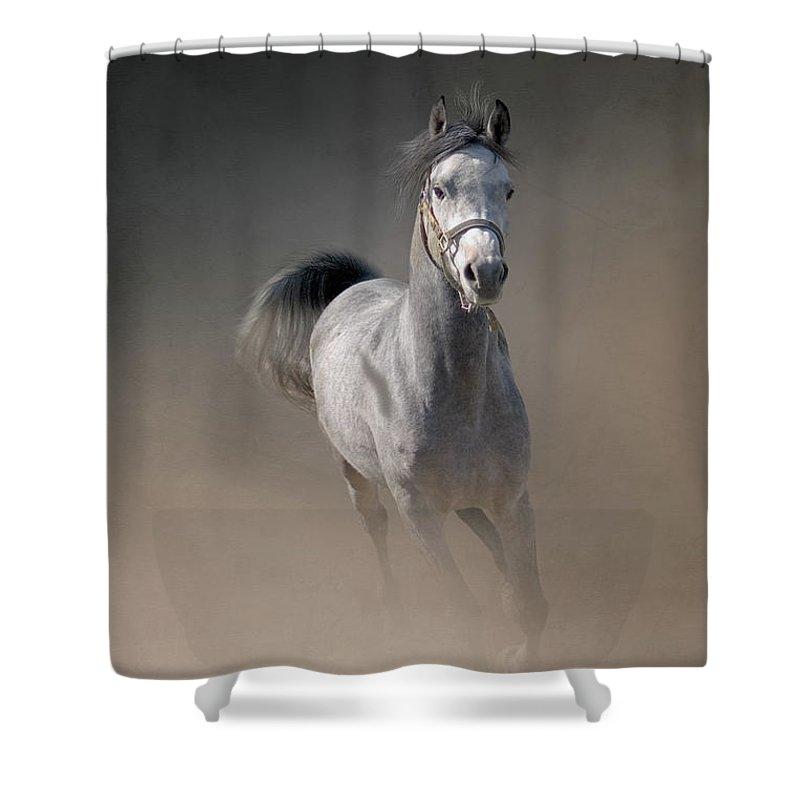 Horse Shower Curtain featuring the photograph Arabian Horse Running Through Dust by Christiana Stawski