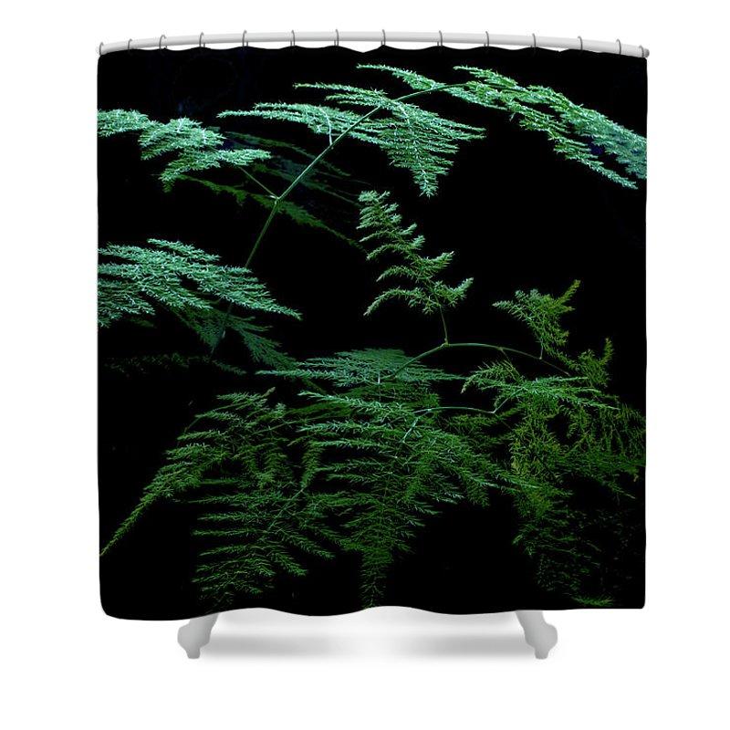 Asparagaceae Shower Curtain featuring the photograph Asparagus Fern by Jarmo Honkanen