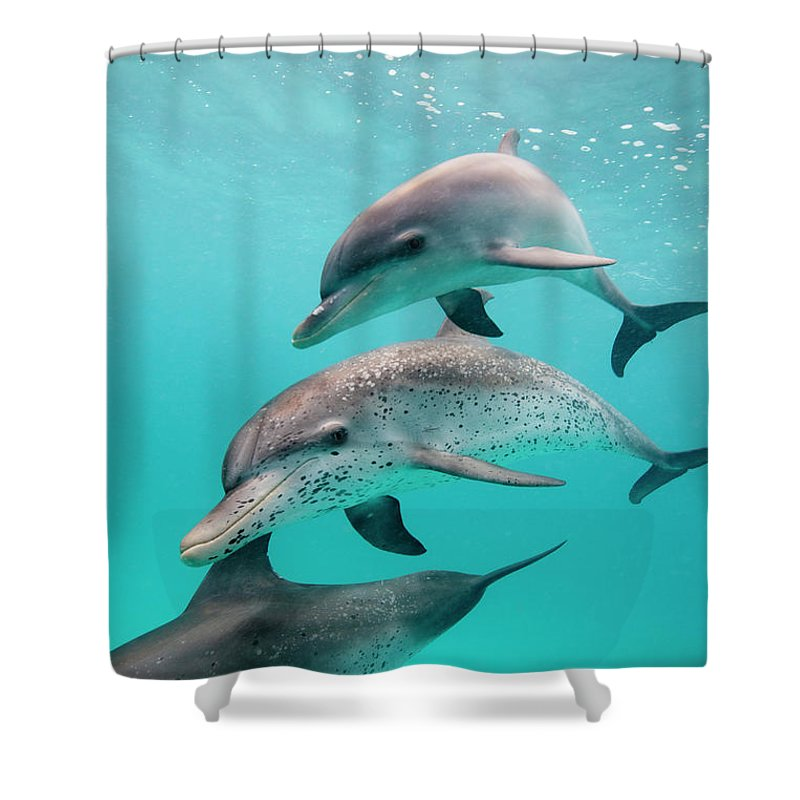 Underwater Shower Curtain featuring the photograph Atlantic Spotted Dolphin Stenella by Stephen Frink