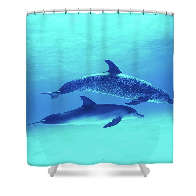 Underwater Shower Curtain featuring the photograph Atlantic Spotted Dolphins Stenella by Rene Frederick