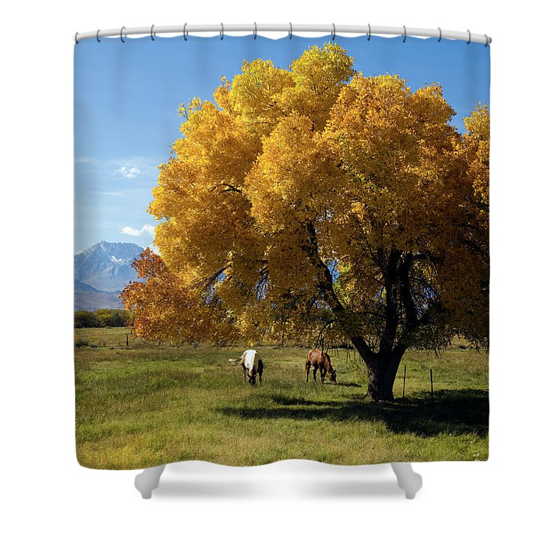 Horse Shower Curtain featuring the photograph Autumn Horses by Kevinjeon00