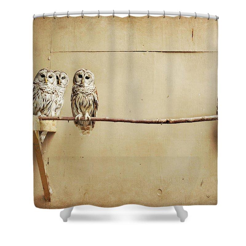 Scranton Shower Curtain featuring the photograph Baby Barred Owls by Tara Reifenheiser
