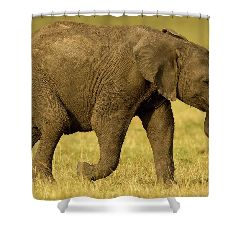 Following Shower Curtain featuring the photograph Baby Elephant Following The Herd On The by Manoj Shah