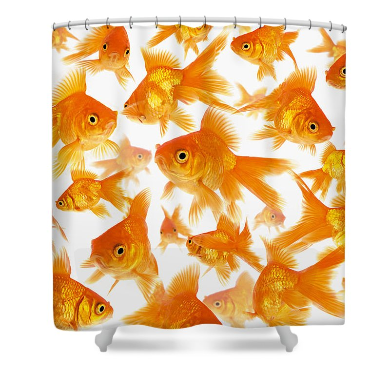 Orange Color Shower Curtain featuring the photograph Background Showing A Large Group Of by Cocoon