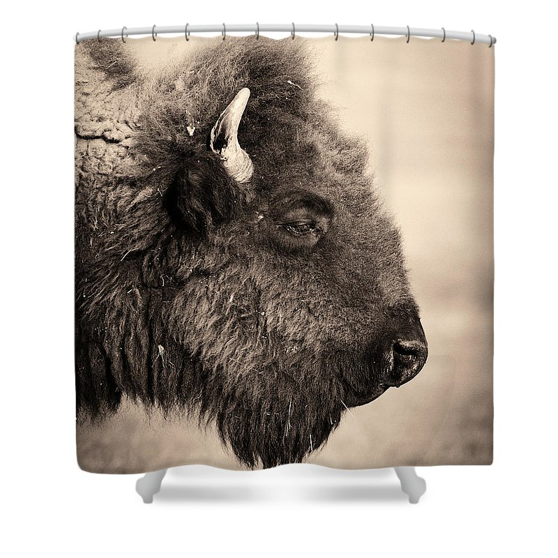 Horned Shower Curtain featuring the photograph Badlands National Park Portrait Of A by Elementalimaging