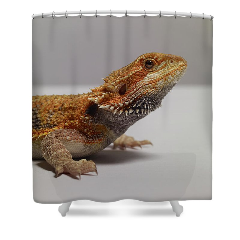 Alertness Shower Curtain featuring the photograph Bearded Dragon by Dan Burn-forti