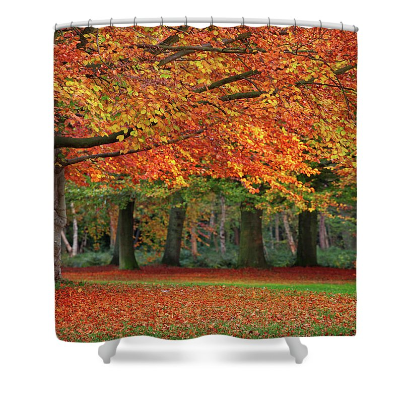 Orange Color Shower Curtain featuring the photograph Beautiful Autumn In Park by Lorado