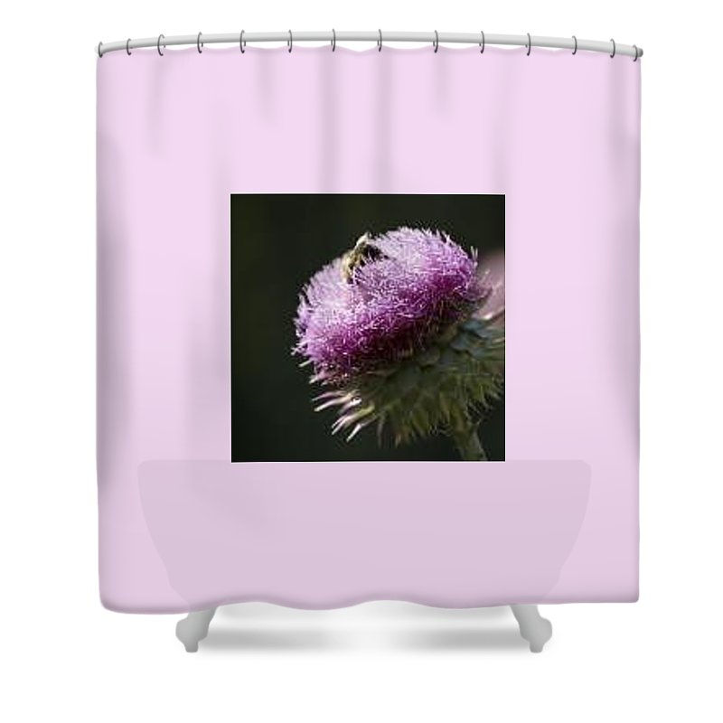 Bee Shower Curtain featuring the photograph Bee On Thistle by Nancy Ayanna Wyatt