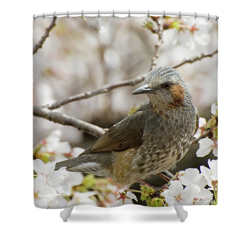 Alertness Shower Curtain featuring the photograph Bird Perched Among Cherry Blossoms by Philippe Widling / Design Pics
