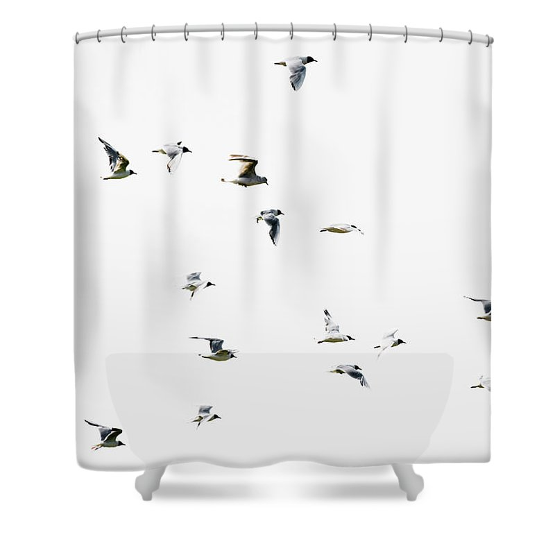 England Shower Curtain featuring the photograph Birds In Flight by Magnusson, Roine
