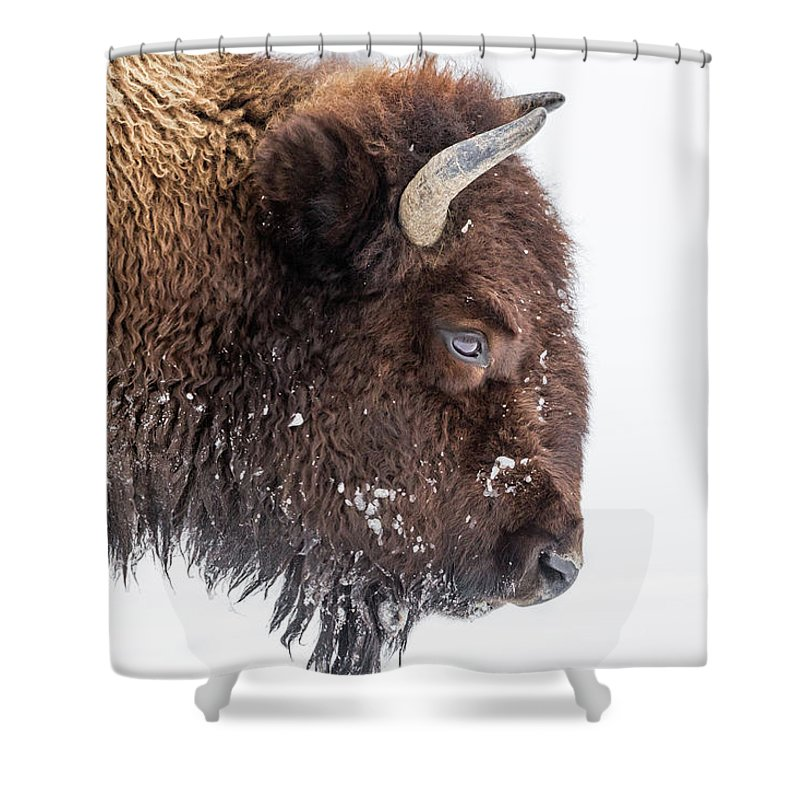 Vertebrate Shower Curtain featuring the photograph Bison In Winter by Kencanning