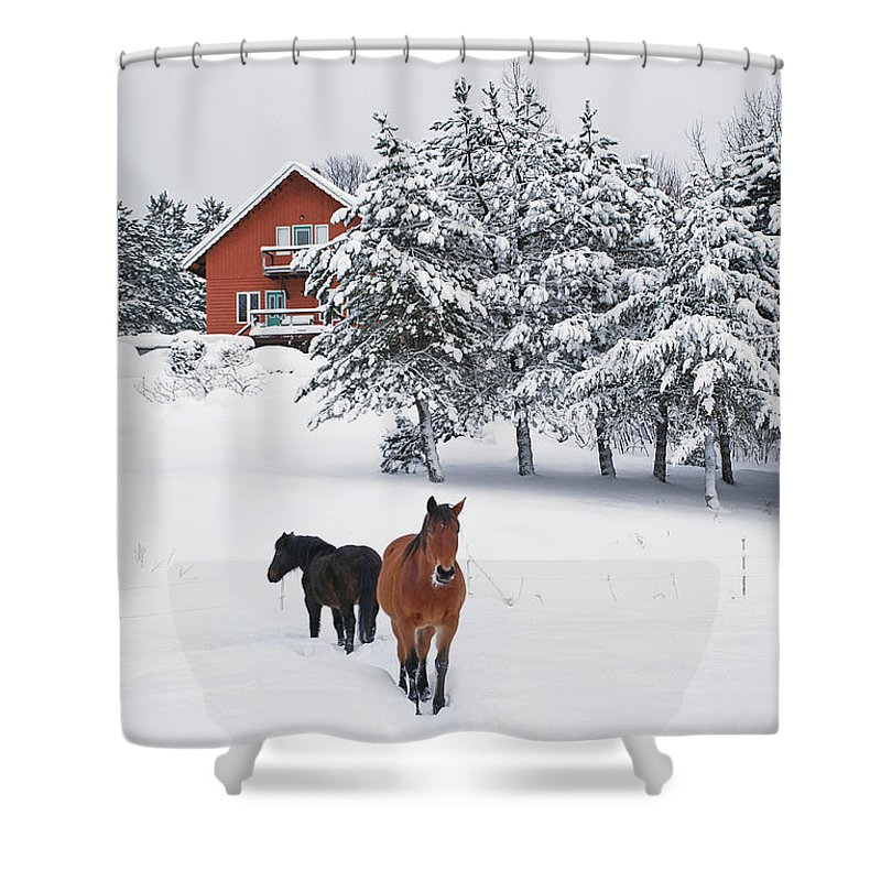 Horse Shower Curtain featuring the photograph Black And Brown Horse by Anne Louise Macdonald Of Hug A Horse Farm