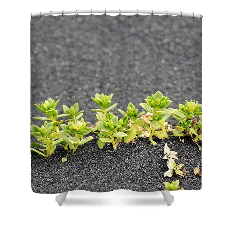 Black Sand Shower Curtain featuring the photograph Black Sand Greenery by Norman Burnham