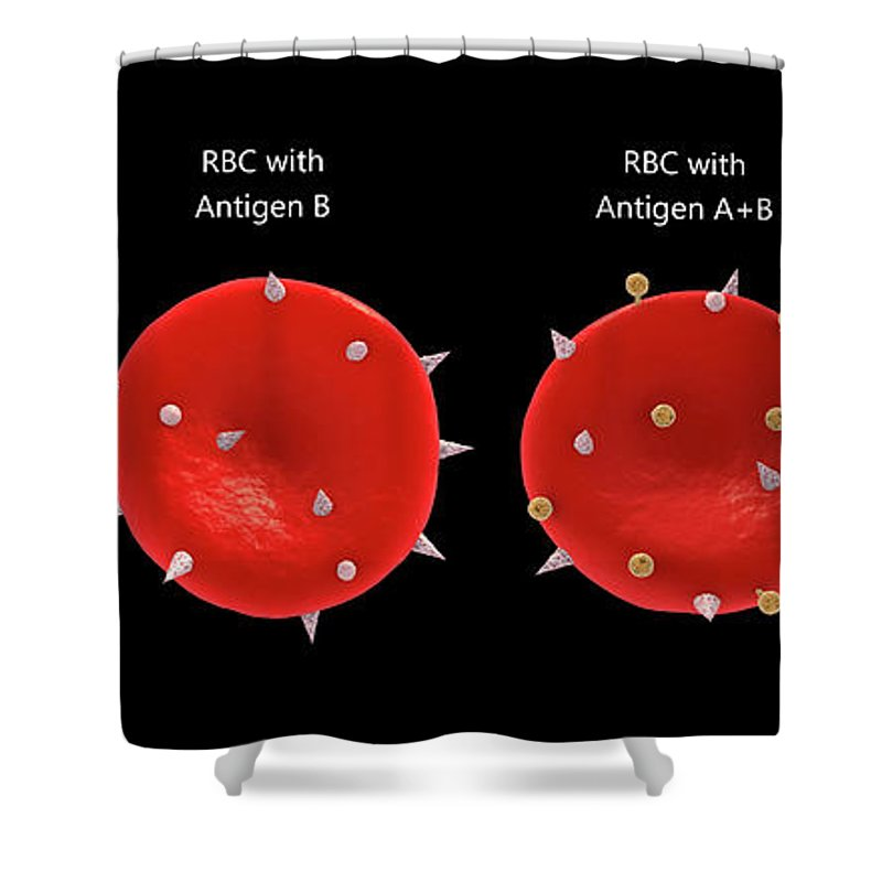 Red Blood Cells Shower Curtain featuring the digital art Blood Group Antigens On The Red Blood Cell Membrane. by Stocktrek Images