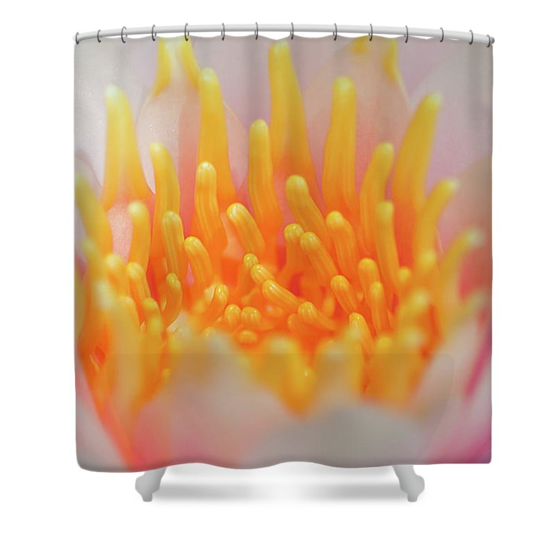 White Water Lily Shower Curtain featuring the photograph Blooming Virgins by Az Jackson