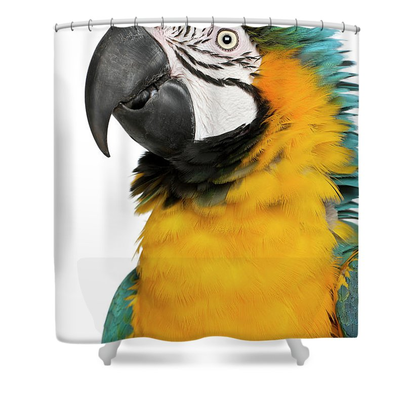 Macaw Shower Curtain featuring the photograph Blue And Yellow Macaw, Ara Ararauna by Life On White