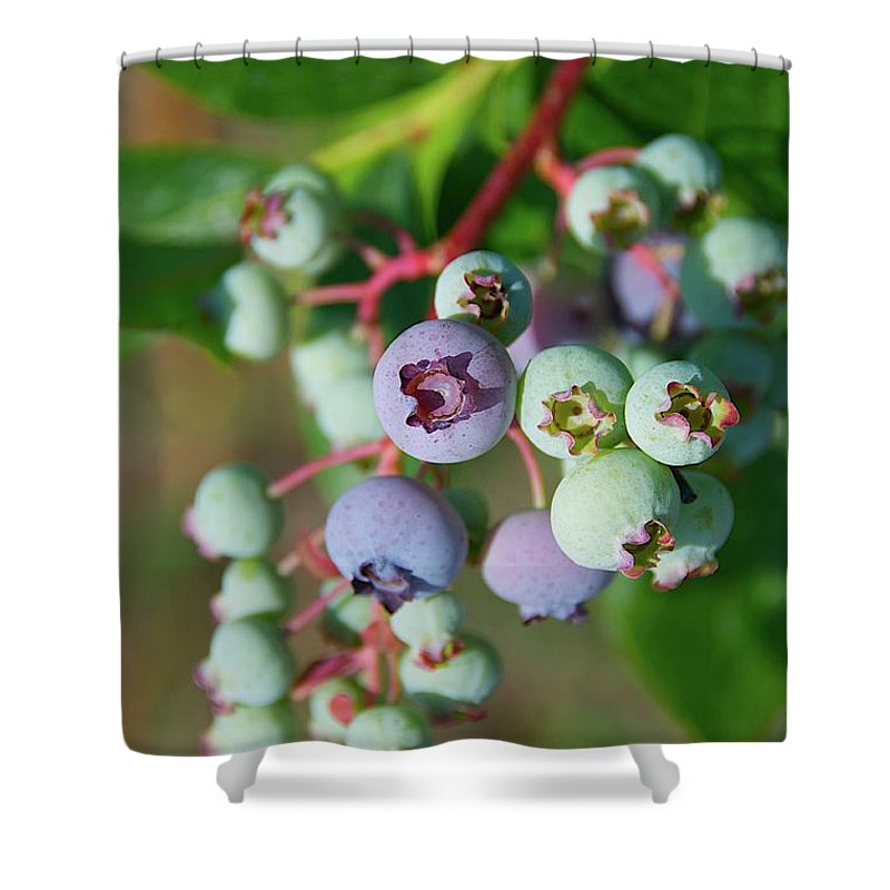 Large Group Of Objects Shower Curtain featuring the photograph Blueberries by ©howd, Howard Lau