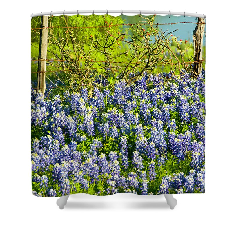 Season Shower Curtain featuring the photograph Bluebonnets, Texas by Donovan Reese