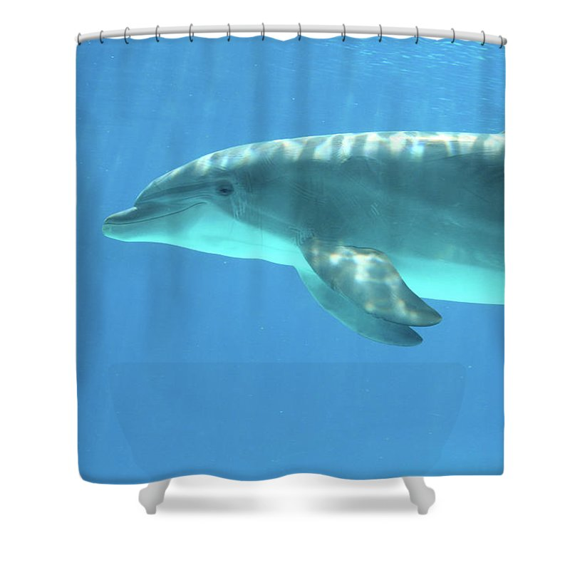 Underwater Shower Curtain featuring the photograph Bottlenose Dolphin by Anzeletti