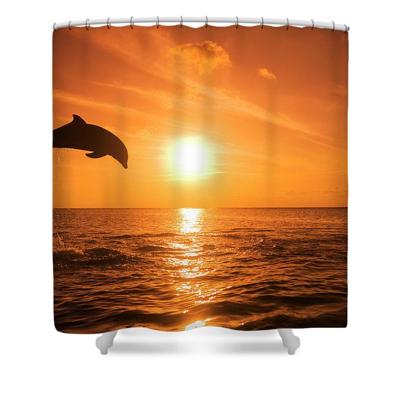 Orange Color Shower Curtain featuring the photograph Bottlenose Dolphin Tursiops Truncatus by Rene Frederick
