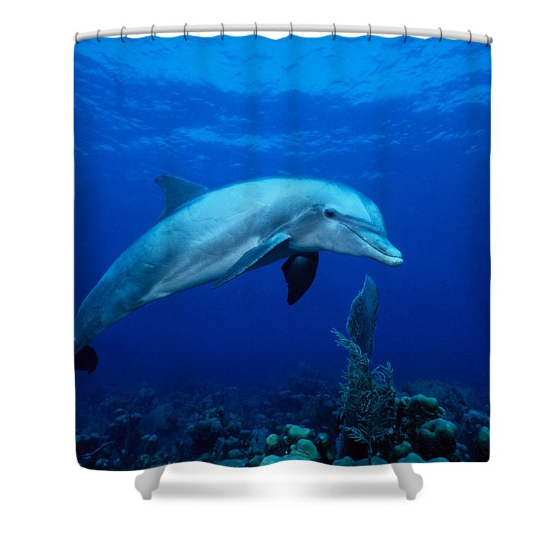 Underwater Shower Curtain featuring the photograph Bottlenose Dolphin,tursiops by Gerard Soury