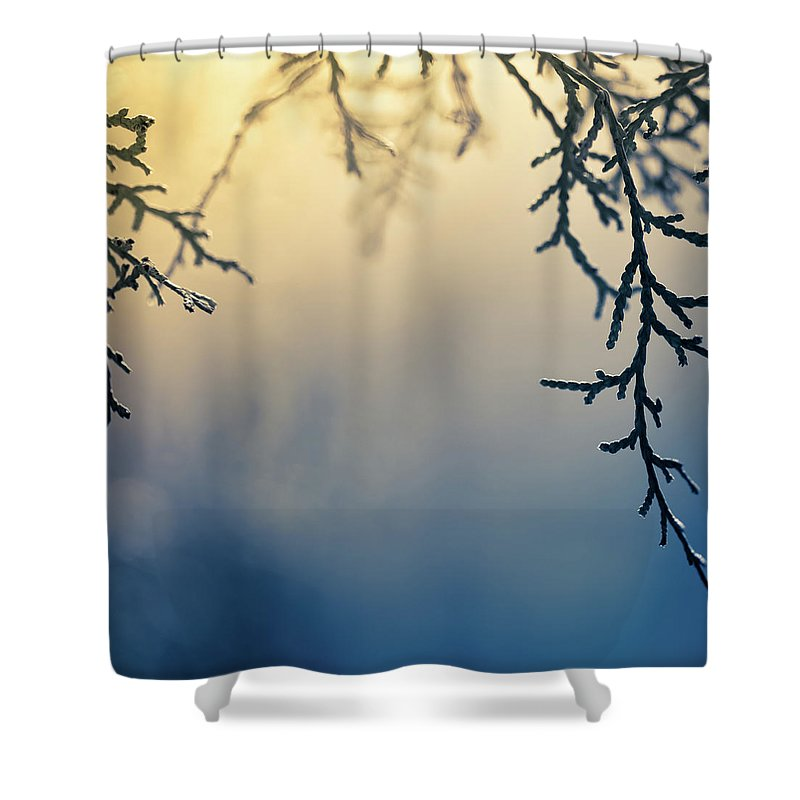 Saturated Color Shower Curtain featuring the photograph Branch Of Pine Tree by Jeja