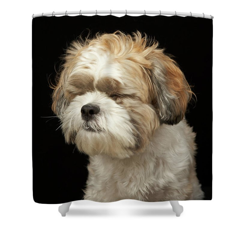 Pets Shower Curtain featuring the photograph Brown And White Shih Tzu With Eyes by M Photo